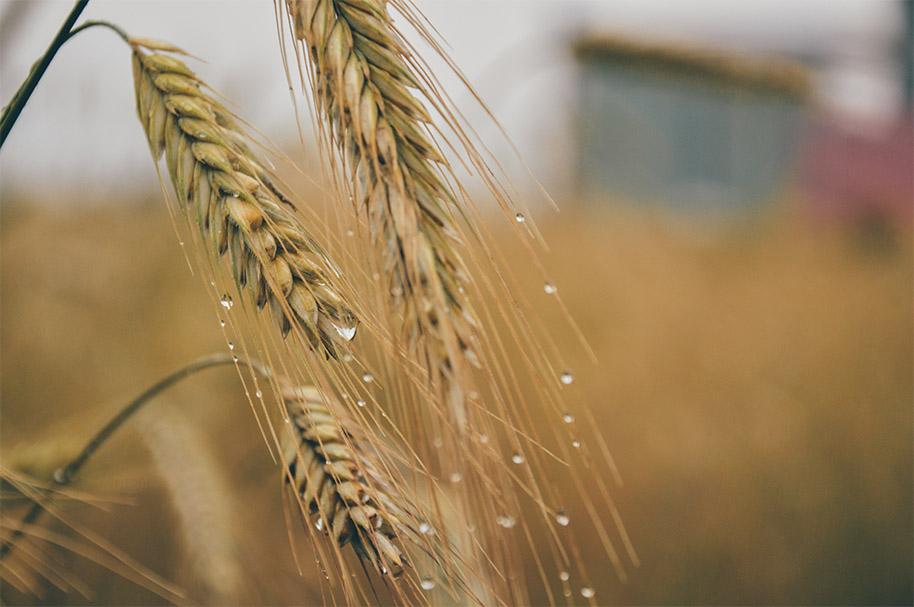 Elaborar cerveza con copos de cereales: ventajas e inconvenientes